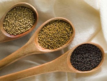 Yellow, oriental and brown mustard seed